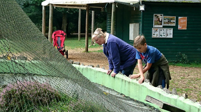 New Forest Reptile Centre finding amphibians and reptiles